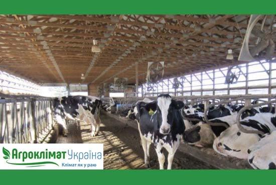 Создание микроклимата на ферме для крс